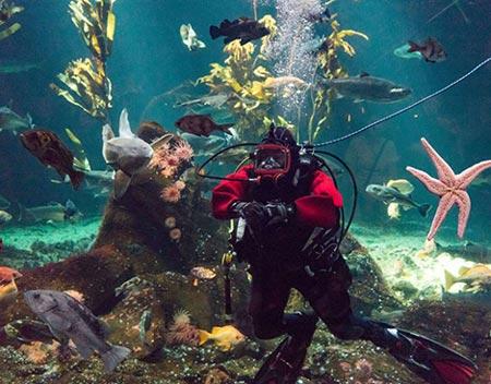 عکس های خفن ترین و غول آساترین اکواریوم های دنیا