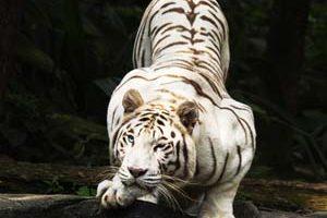 زیبایی خیره کننده این حیوانات ماتتان میکند (عکس) 1