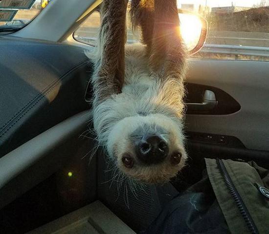 عکس هایی از کارهای خنده دار حیوانات