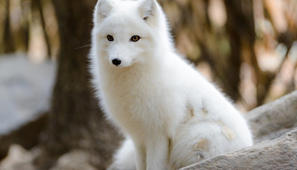 زیبایی خیره کننده این حیوانات ماتتان میکند (عکس)