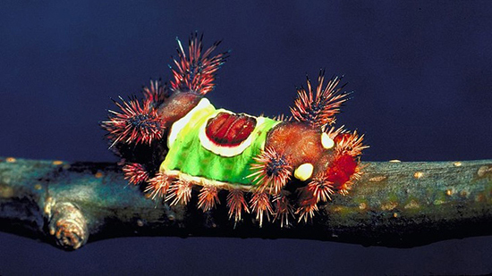 با دیدن این حشرات ناز عاشقشان میشوید