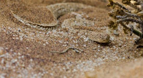 عکس هایی جالب و دیدنی استتار مارها در طبیعت
