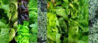 سبزی های مفید و پر خاصیت برای بدن ما کدامند