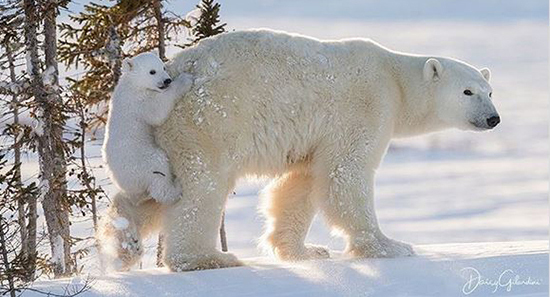عکس های زیبا از عشق مادر و فرزندی در حیوانات