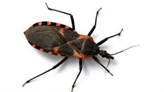 ترسناکترین و کشنده ترین حشرات دنیا را بشناسید