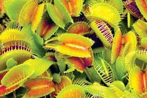 گیاهان عجیبی که مطمئنن تا بحال ندیده اید!!(+عکس)