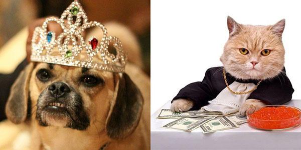 با پشمالوهای میلیونر و صاحبان ثروتمندشان آشنا شوید (عکس)