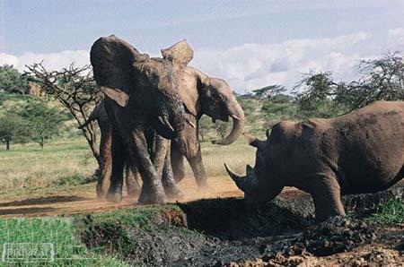 عکسهایی ار حیوانات خطرناک