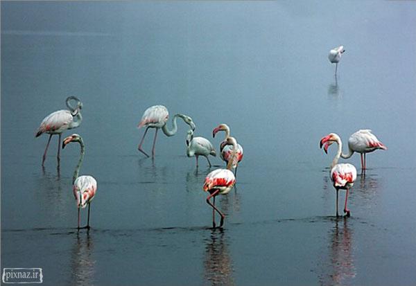 تصاویری از دنیای حیوانات