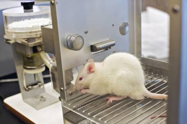 موش های عجیبی که تبدیل به زامبی شدند