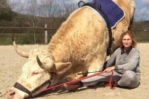 گاو عجیبی که فکر میکند اسب است (عکس)