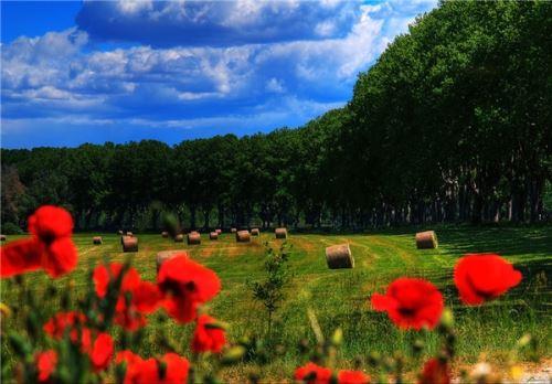 عکس های زیبا و با طراوت بهاری در جهان ^^ 1