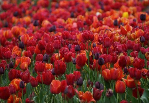 عکس های زیبا و با طراوت بهاری در جهان