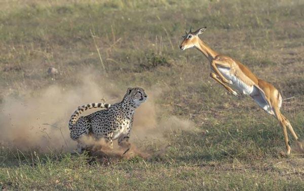 عکس های حیرت انگیز از یک شکار ناکام (عکس)