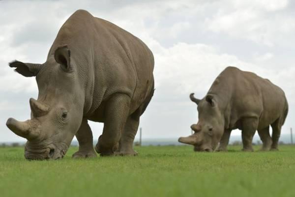 حیواناتی که نسل آنها در حال انقراض است (عکس)