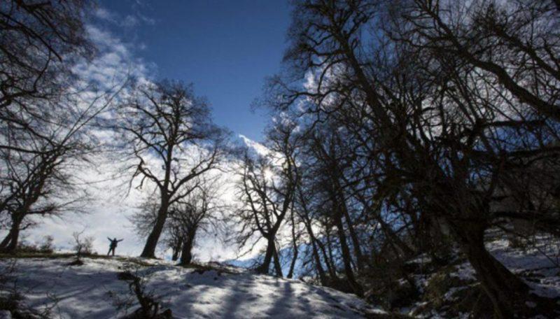آشنایی با جنگل دالخانی و عکس های بهشت رامسر