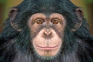 باهوشترین حیوانات روی زمین را بشناسید
