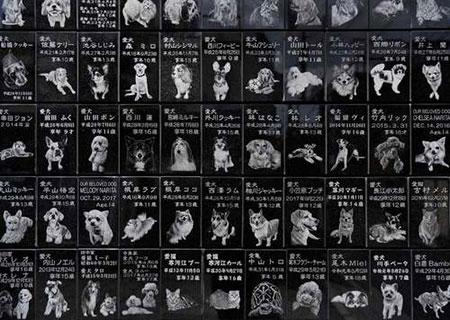 عکس های جالب و دیدنی روز 16 مهر
