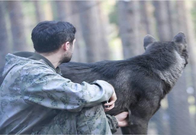 زندگی مرد روسی با گرگها (تصاویر)