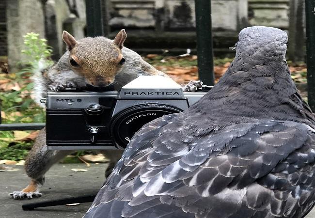 عکاسی سنجاب از کبوترها!  (تصاویر)
