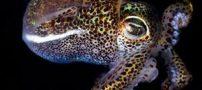 عکس هایی از زیباترین اختاپوس دنیا