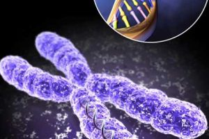 صفاتی که با عنوان ژنتیک به ارث میبریم