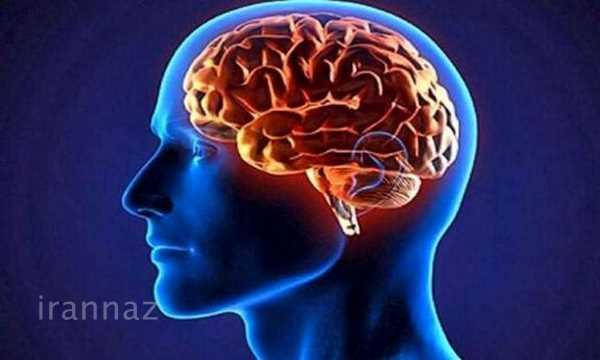 کشف سیگنالی جدید در مغز که تا بهحال مشاهده نشده بود