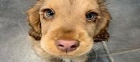 چشم های این سگ دنیا را فتح کرد (عکس)