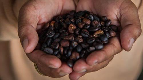 چربی قهوه ای باعث لاغری شما میشود (عکس)