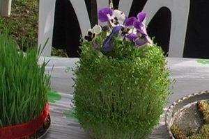 آموزش 5 نوع سبزه عید و زمان دقیق خیس کردن دانه ها