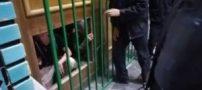 واکنش حوزه به شکستن در حرم حضرت معصومه (فیلم)