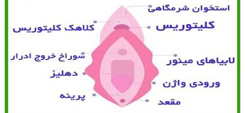 آشنایی با لابیا پلاستی واژن و عملهای آلت تاسلی زنان (عکس)