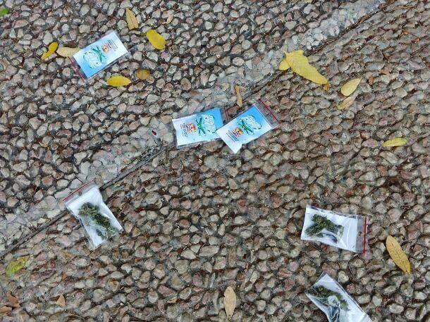 بارش ماریجوانا و ماده مخدر گل از آسمان اسرائیل (عکس)