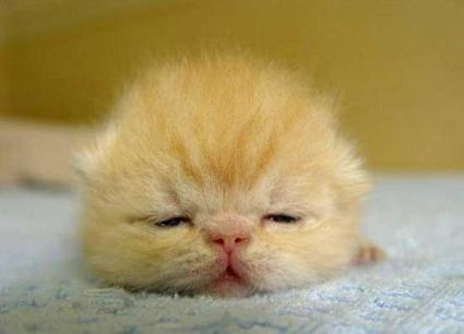 عکسهای بامزه از نوزاد حیوانات