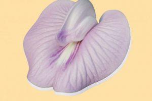 چگونگی خروج باد از واژن و راه پیشگیری و درمان آن