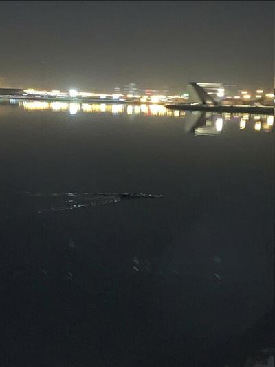 اولین فیلم از رد پا و فضله تمساح در دریاچه چیتگر (جزئیات)