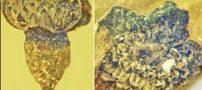 کشف گل با قدمت صد میلیون سال ( تصاویر )