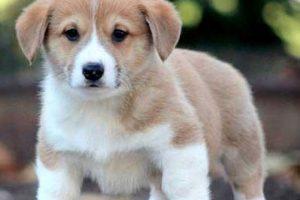 تصاویر جذاب و دیدنی از زیباترین سگ هایی که تا به حال دیدید