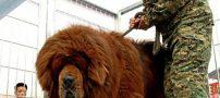جا زدن سگ به جای شیر و موش به جای مار در این باغ وحش + عکس