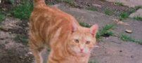 با پیر ترین گربه دنیا آشنا شوید + عکس