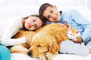 حیوان خانگی و مناسب برای نگهداری از نظر اسلام چیست ؟