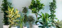 چرا گل های آپارتمانی زرد میشوند؟
