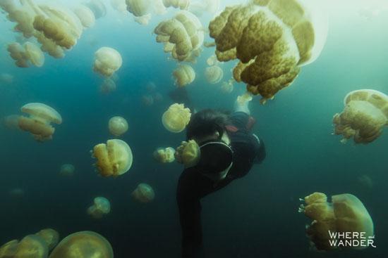 عکس های سلفی دیدنی و جالب با عروس دریایی در اعماق دریا