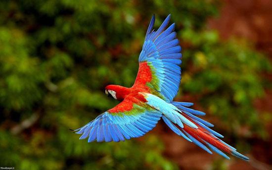 زیباترین طوطی هایی که تا به حال دیده اید + عکس