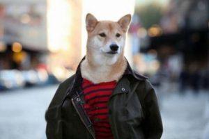 این سگ ماهیانه 36 میلیون در آمد دارد + عکس