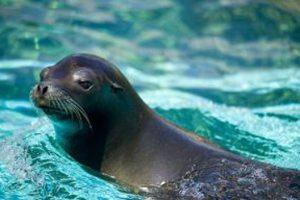 عکس های دیدنی شکار شده از حمام کردن شیرهای دریایی