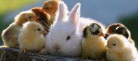 عکس های بسیار بامزه و خنده دار از حیوانات دوست داشتنی