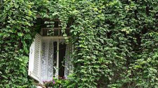 خرید و معرفی ۵ گل آپارتمانی رونده که تا ثریا میرویند
