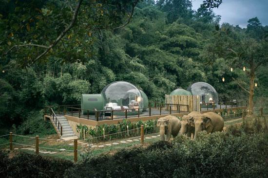 جاذبه گردشگری تایلند حباب های جنگلی + عکس