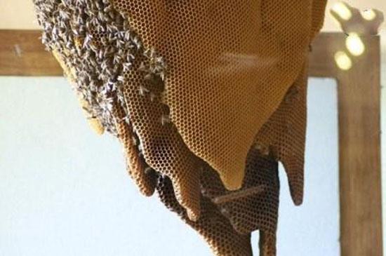 عکس های جالب از موزه کندوی زنبور عسل